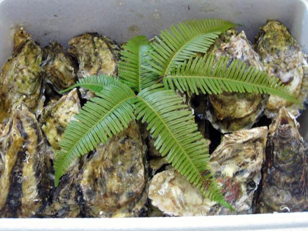 伊勢志摩産の牡蠣