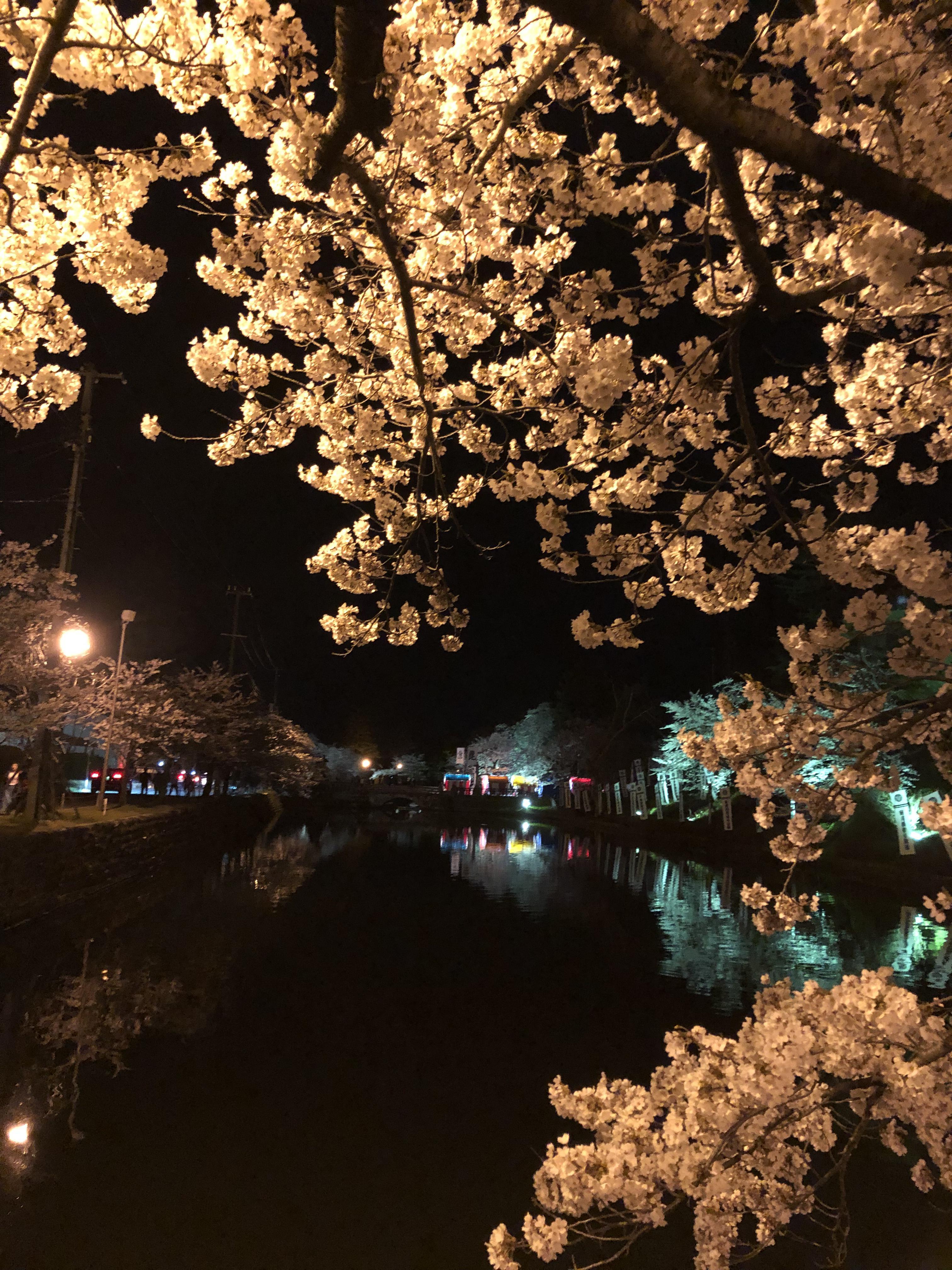 ★石屋のおっか★夜桜キレイ