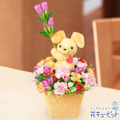 2017/09/14 14:03/9/18 敬老の日のステキな花贈りは、花キューピットのお店で。(^O^)/