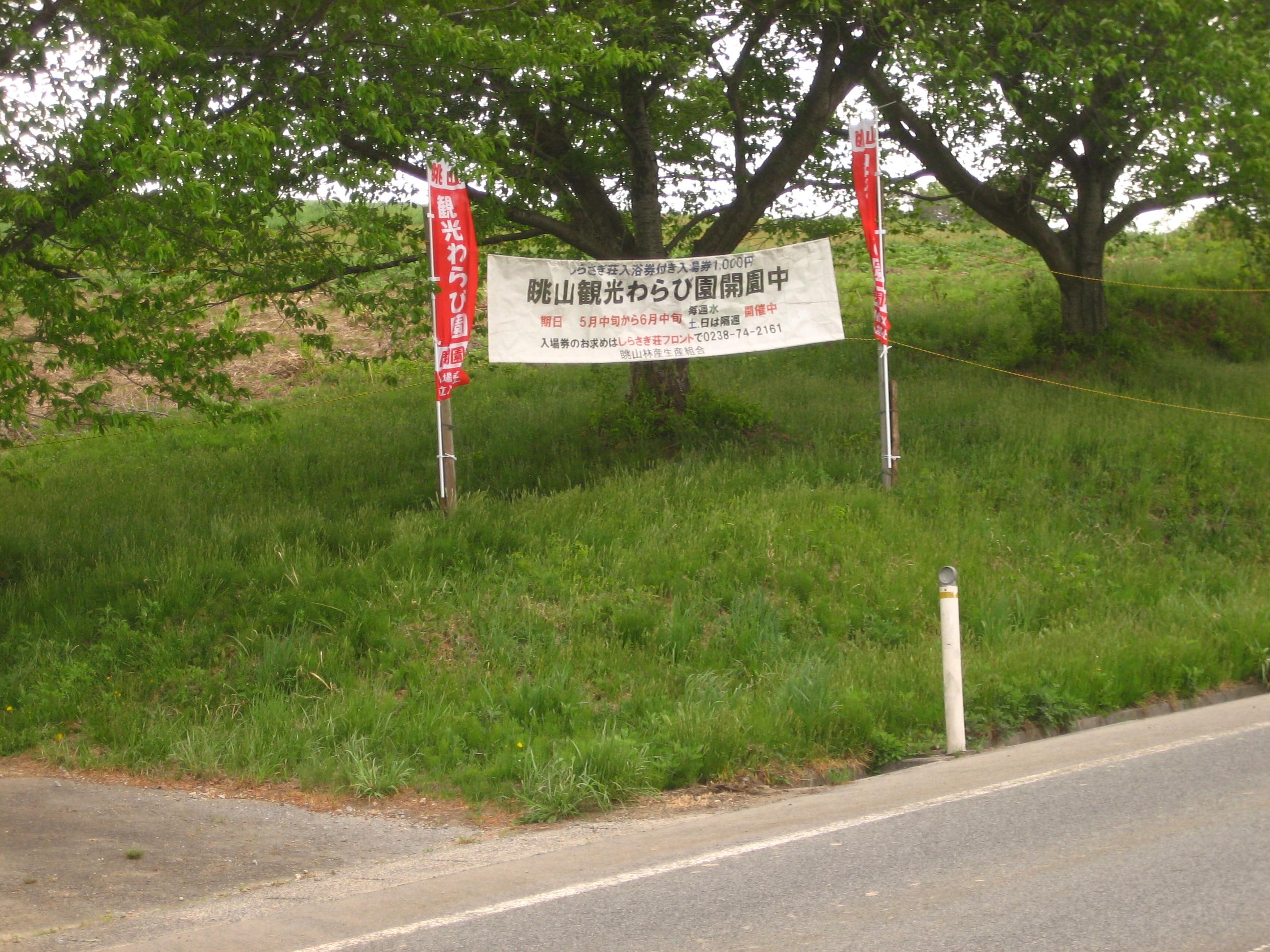 平成27年度眺山観光わらび園オープン:画像