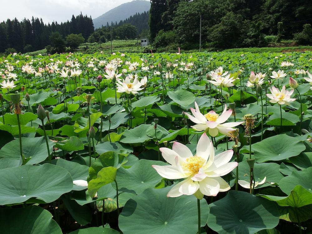 たての香苑:画像