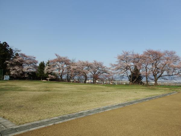 桜の開花状況 【2016.4.13現在】