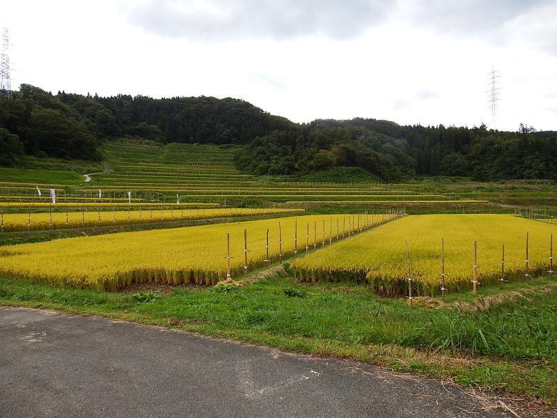 大蕨の棚田 【2017・9・21現在】