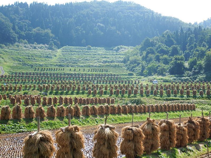 Tanada [as of 2017.9.27 day] of large bracken