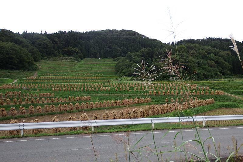 Tanada [as of September 24] of large bracken