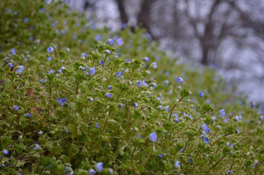 春を探して烏帽子山