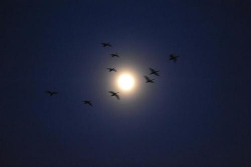 【WEB部活動】写真部 3月 白鳥の北帰行がはじまっています:画像