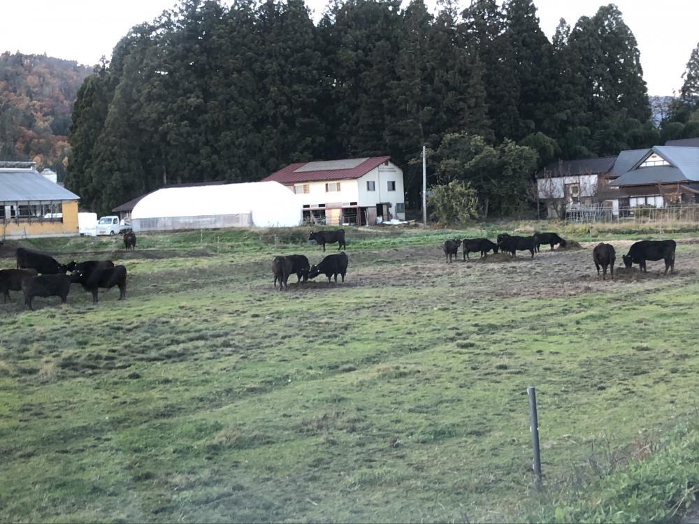 米沢牛牧畜