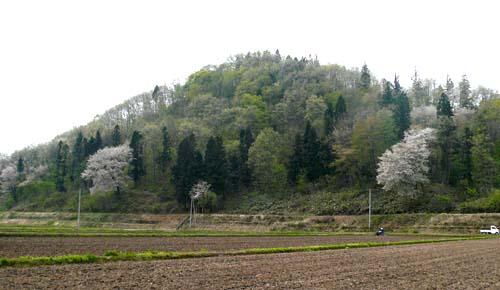2009/04/28 09:39/秋葉山交遊の森探訪コース