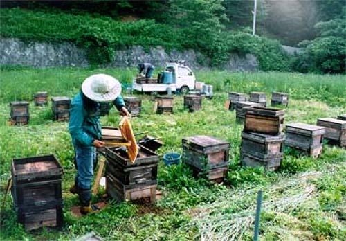 2009/04/08 08:30/ハチミツの収穫