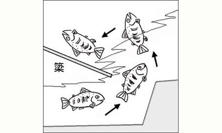 2009/04/16 21:40/最上川で一番多かった簗