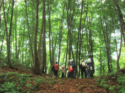 2013/04/27 12:43/【終了】高田山ブナの森探索会 5月12日