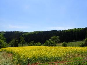【イベント】5/21(日)菜の花観写祭9 開催  ※終了しました※:画像