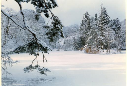 2/23 冬の絶景 大沼の浮島を訪ねる~あつあつひきずりうどん付き~※終了しました※