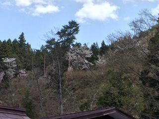 裏山の 桜公園