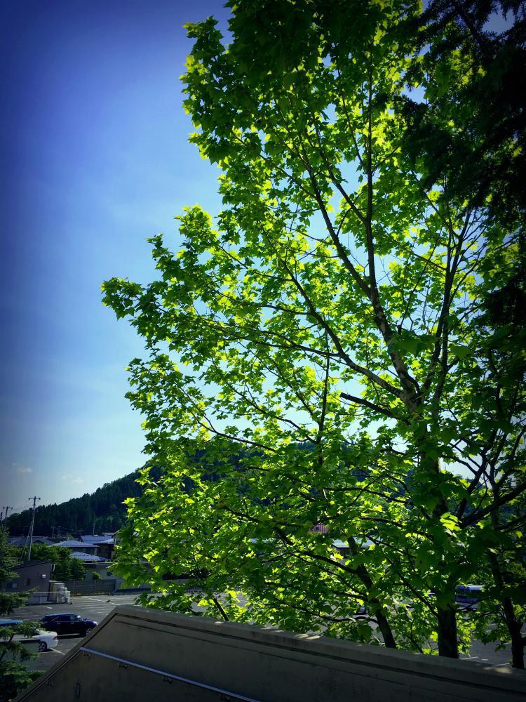緑の中のチャペル|チャペル アヴェニール