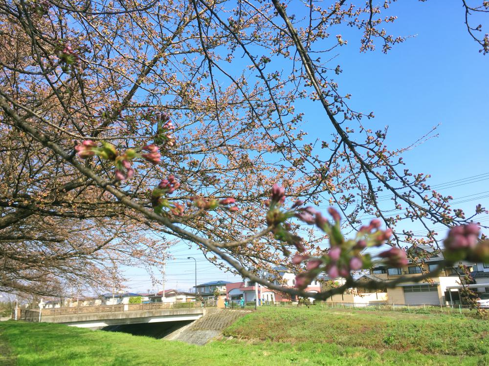春ですね~ポカポカ陽気です|ブライダルサロンアヴェニール