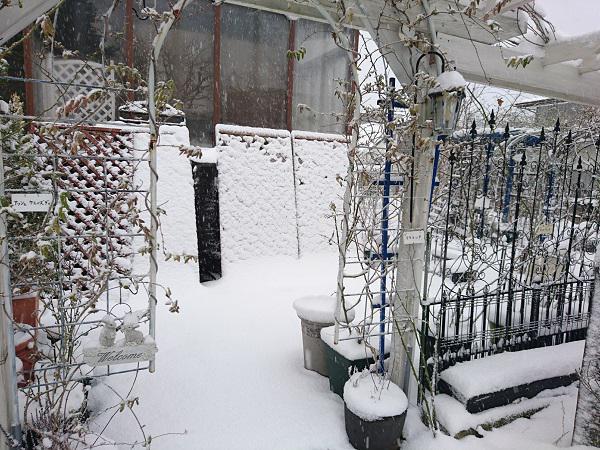 《バラ庭》ガーデンNOW~・・きょうは、雪一色!!
