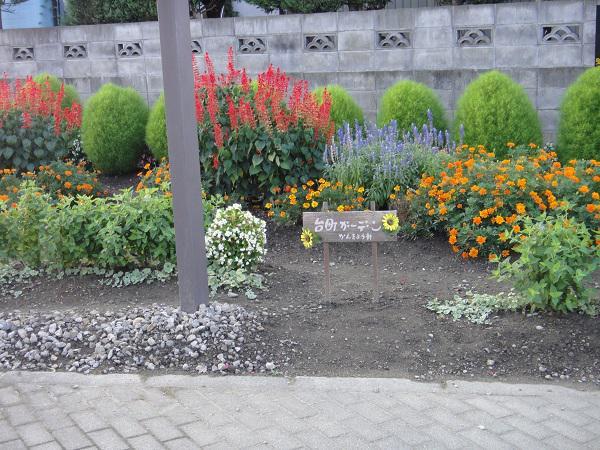 《バラ庭》庭主の日々~・・地区花壇、まだまだ頑張っています!