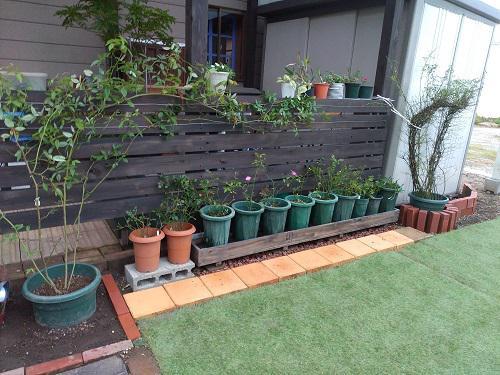 《バラ庭》ガーデンNOW〜・・新設の小屋の周辺を整備。。。/