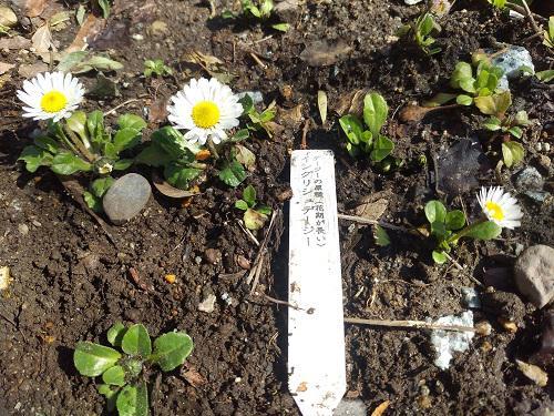 《バラ庭》ガーデンNOW~・・今日は19.3℃。。。!