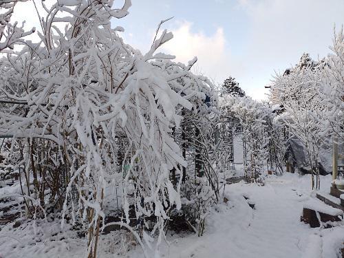 《バラ庭》つれづれ~・・今朝は、雪!!・・・