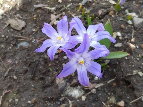 《バラ庭》ガーデンNOW~・・今日の花。。。
