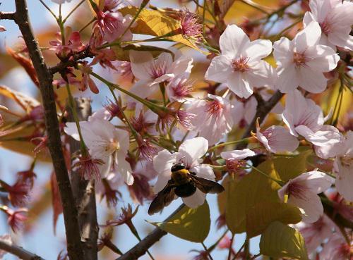 《バラ庭》ガーデンNOW~・・きょうはポカポカ陽気~(^^♪
