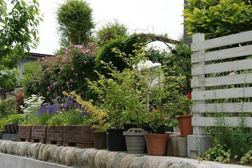 《バラ庭》ガーデンNOW~・・今年の新しい風景!