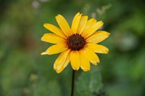 《バラ庭》ガーデンNOW〜・・きょうの庭〜黄花。。。♪/