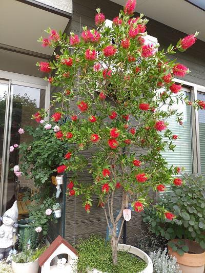 《バラ庭》ガーデンNOW~・・きょうは雨、昨日で冬支度終わりました!
