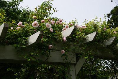 《バラ庭》ガーデン~・・メモリアル~5/26の庭~