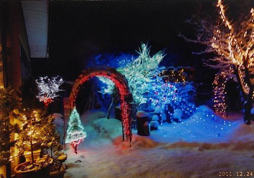 《バラ庭》つれづれ~・・クリスマスもう少しですが。。。