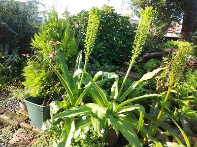 《バラ庭》ガーデンNOW~・・きょうの庭~けさはもやが・・・!