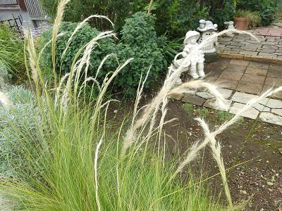 《バラ庭》ガーデンNOW~・・すっかり秋ですね!