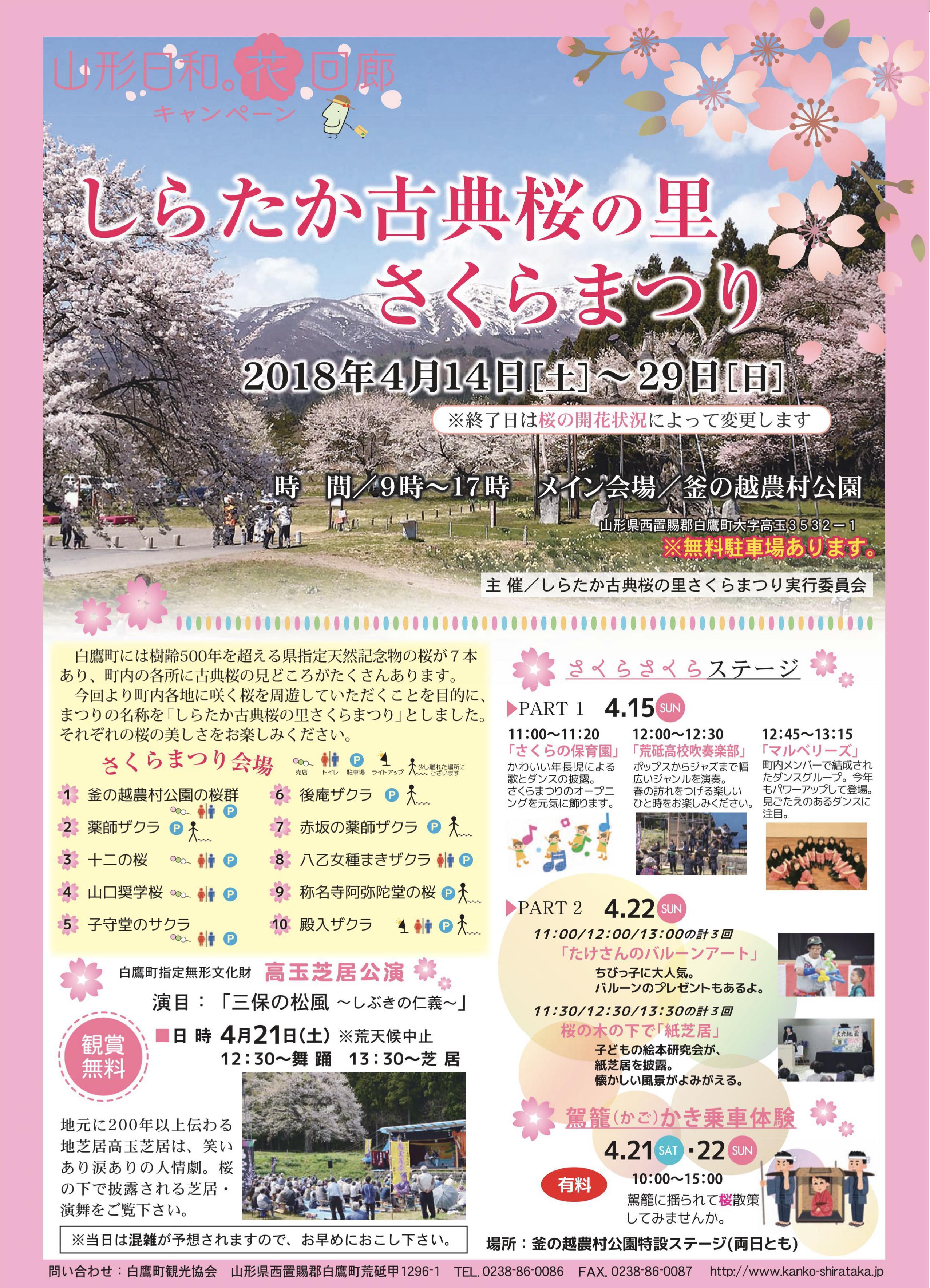 Village Cherry Blossom Festival of shirataka classic cherry tree: Image