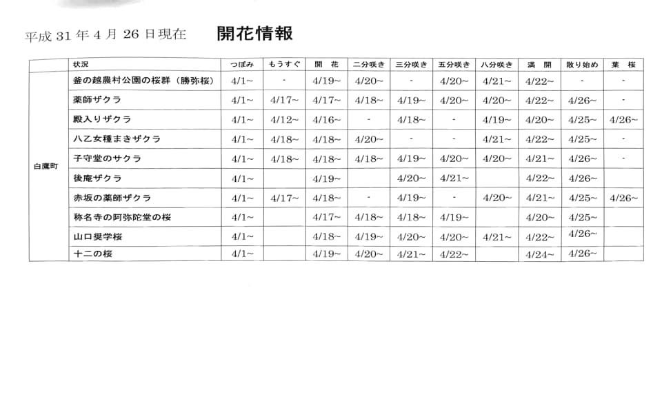 【4/26 古典桜開花情報】:画像