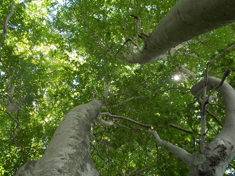7月12日『ブナの森ミーティング』参加者募集