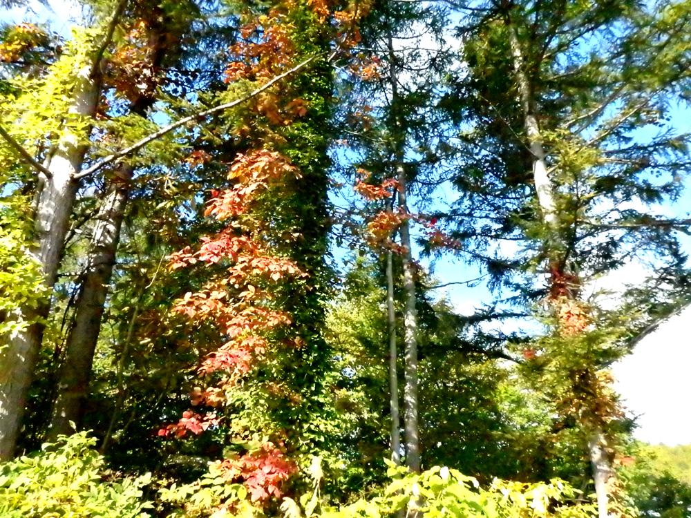 10月18日ブナの森ミーティング開催