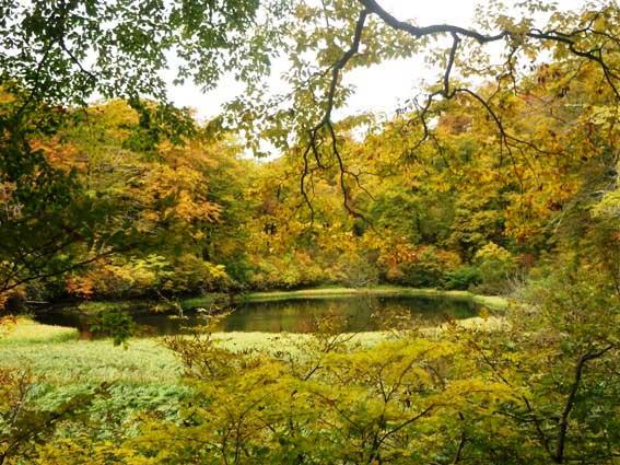 10月23日ブナの森散策『初心者のための入門講座』