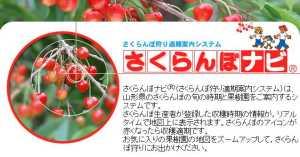 2012/12/01 18:35/【6次産業化を応援します!】「さくらんぼナビ」のご紹介