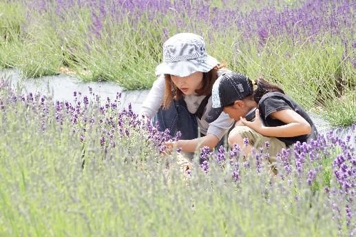 置賜公園ハーブガーデンをオープンします(6月27日〜7月5日):画像
