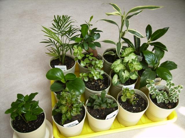 観葉植物の植え替えにもイデアルグリーン:画像