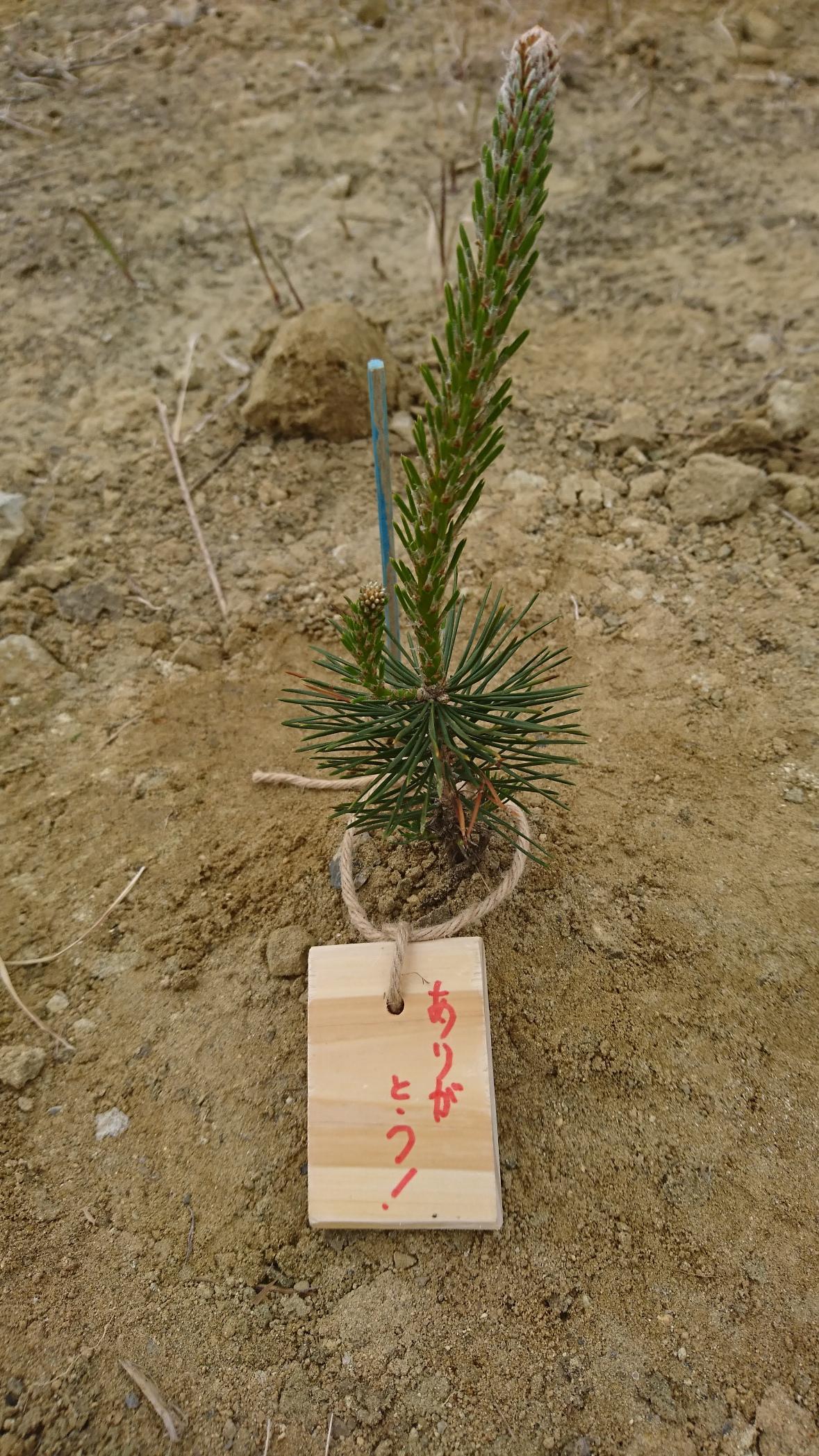 東松島市 植樹会