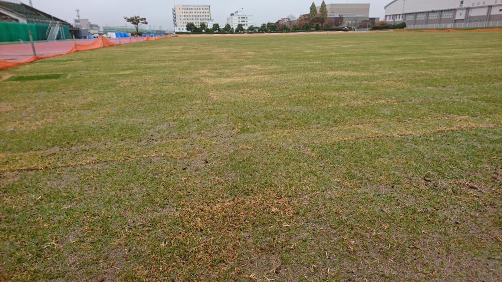 芝生化工事完了
