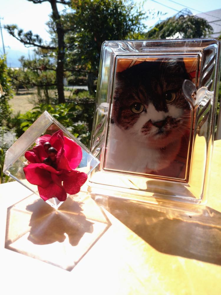 てのり花×愛猫 アーティフィっシャルフラワー