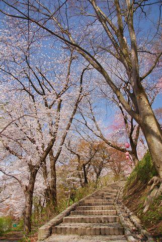 2015/04/03 13:28/南陽パワースポット(1) さくら坂伝説
