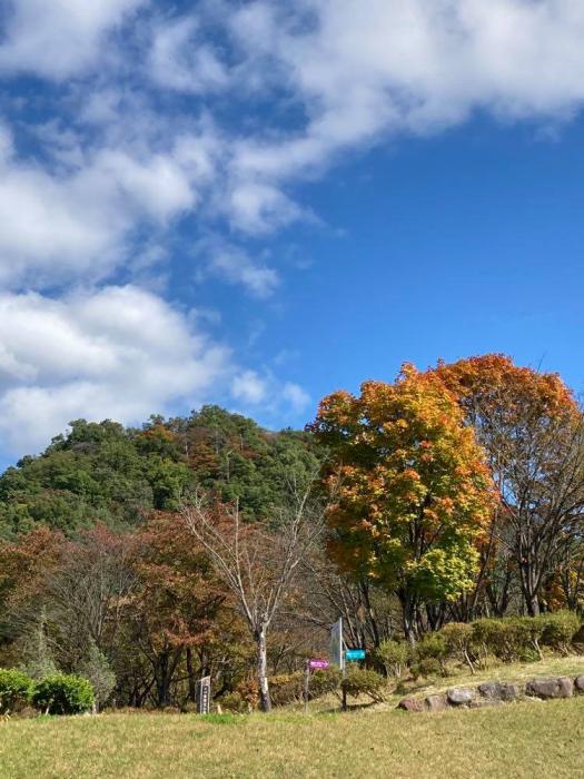秋空キラキラ♪