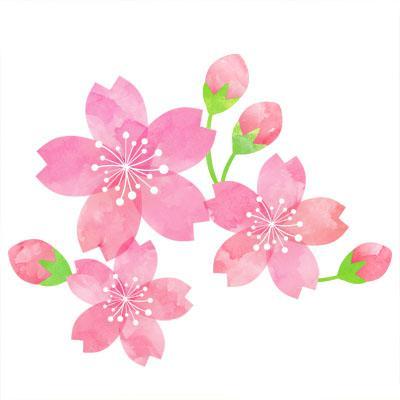 桜の季節がやってきました!