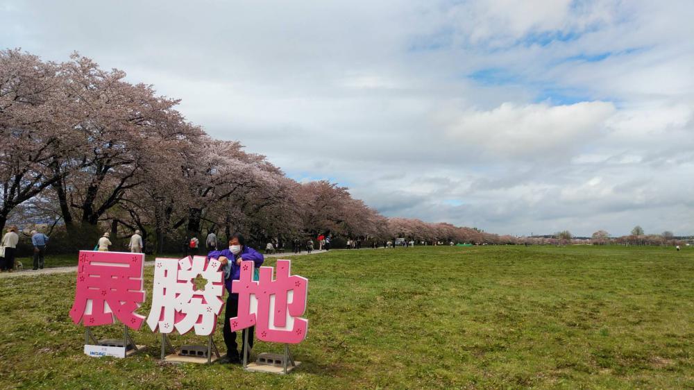 桜前線!北上!!:画像